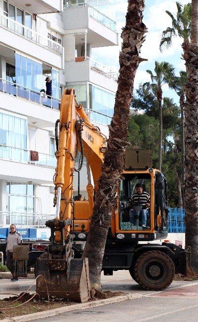 Abim'e Müracaat Palmiyeyi Kurtardı