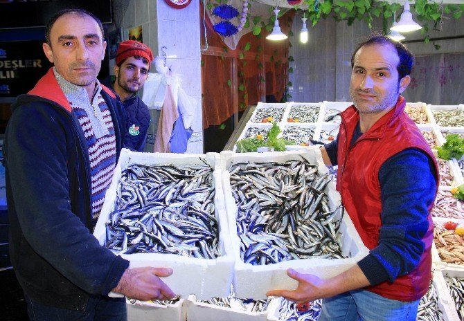 Samsun'da Hamsi Fiyatı Yarı Yarıya Düştü