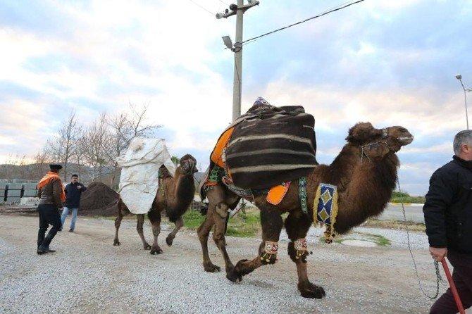 Pamucak Arena Heyecanlı Güreşlere Ev Sahipliği Yapacak