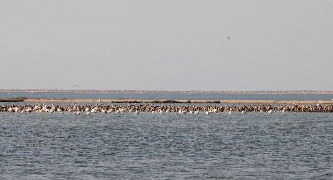 İzmir Körfez Geçişi projesi kuş cennetini tehdit ediyor