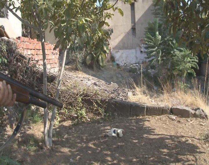 'Kurşun Geçirmez' Dedi, Horozu Öldürdü