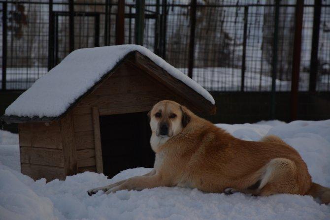 Bitlis'teki köpek kulübeleri kar altında kayboldu