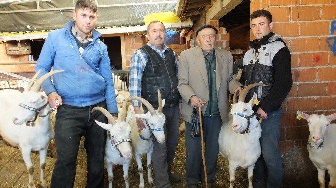 Burhaniyeli Çobanın Azmi Takdir Topladı