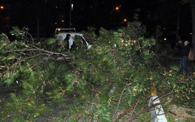 Fırtınada Devrilen Ağaç Sonları Olacaktı