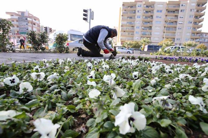 Karşıyaka'ya 200 bin kış çiçeği