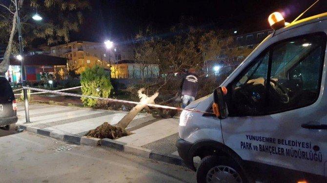 Lodosun Devirdiği Ağaçlar Ekiplerce Kaldırıldı