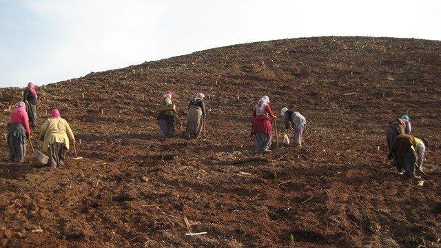 Adana Orman Bölge Müdürlüğü 3.5 Milyon Fidanı Toprakla Buluşturdu
