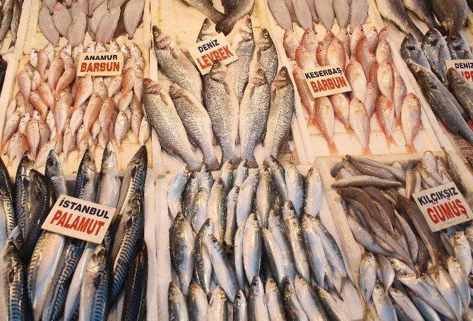 Mersin Balık Pazarında Balık Bolluğu