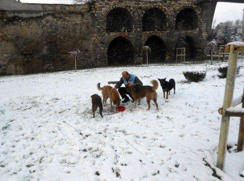 Beyoğlu Belediyesi Sokak Hayvanlarını Unutmadı