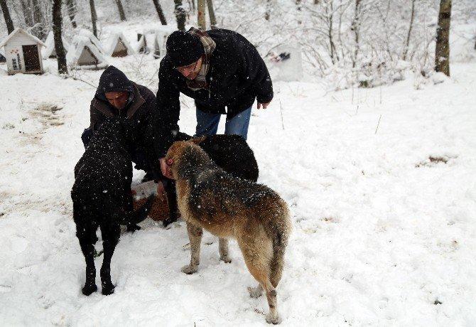 Belediye Ekipleri Sokak Hayvanlarını Besledi