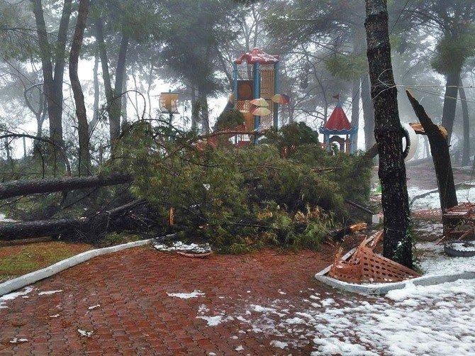 Demirci'de Kar Yağışı Ağaçlara Zarar Verdi