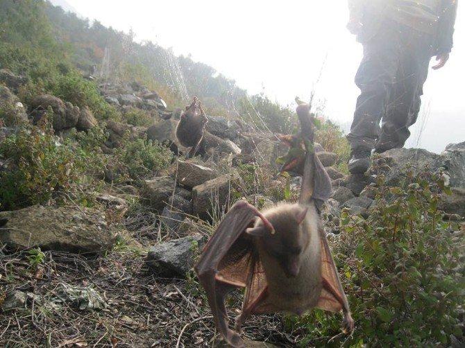 Hayalet Ağlarla Yakalanan 21 Kuş Kurtarıldı