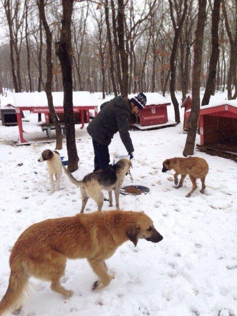 Eyüp Belediyesi Sokak Hayvanları İçin Seferber Oldu
