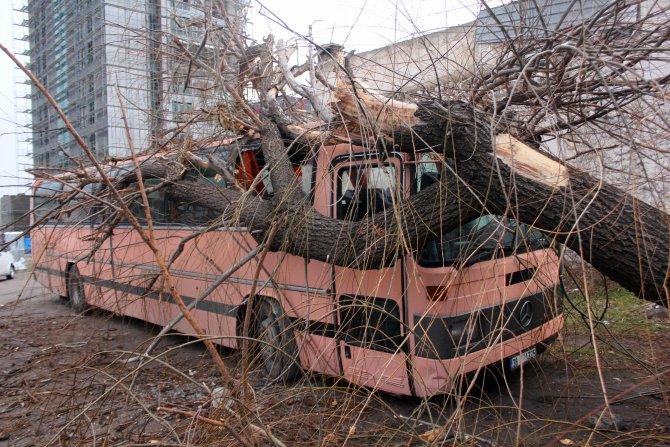 Kayseri'de rüzgar ağaçları devirdi
