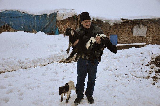 Soğuk Havadan En Fazla Hayvanlar Etkileniyor
