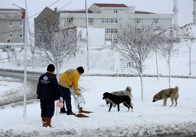 Yaban Ve Sokak Hayvanları İçin Doğaya Yem Bırakıldı