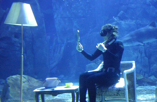 Akvaryumda köpek balıklarıyla kahve keyfi