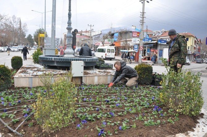 Gölbaşı İlçe Merkezine Kışlık Çiçek Dikiyor