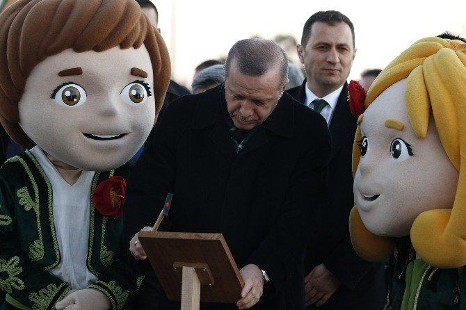 Cumhurbaşkanı Erdoğan, 945 Yaşındaki Zeytin Ağacına Cansuyu Verdi