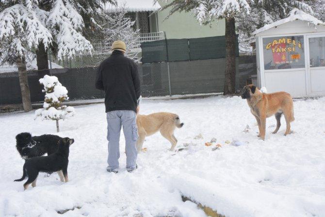 Çameli Belediyesi karda aç kalan hayvanlara yiyecek veriyor