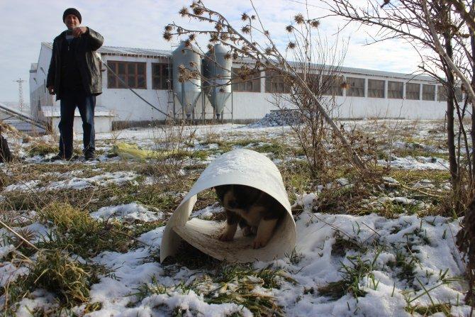 Soğuklar sokak hayvanlarını etkiliyor