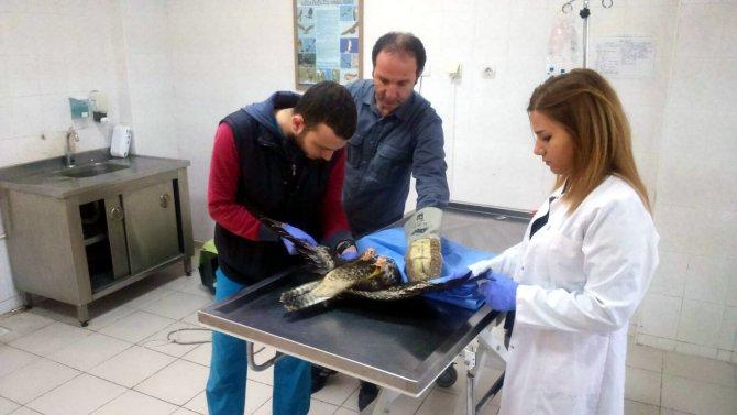 Yaralı 121 yaban hayvanı tedavi edilerek tekrar doğaya salındı