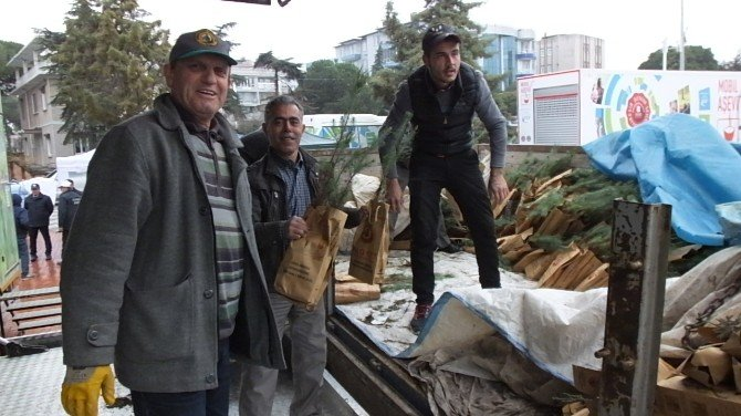 Burhaniye'de Ücretsiz 4 Bin Adet Çam Fidanı Dağıtıldı