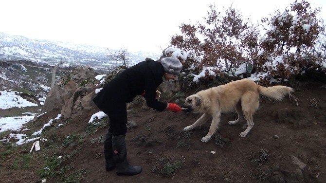 Belediye Sokak Hayvanlarına Sahip Çıktı