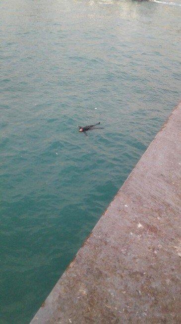 Galata Köprüsü'nden Atlayan Genci Yolcu Teknesi Kurtardı
