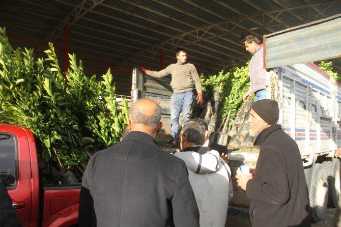 Büyükşehir'den Dörtyol çiftçisine fidan desteği