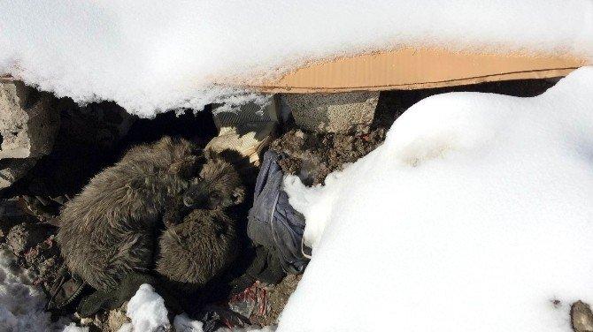 Van'da Yedi Yavru Köpek Ölüme Terk Edildi