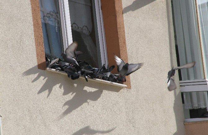 Yozgat'ta Vatandaşlar Kuşları Ve Sokak Hayvanlarını Unutmuyor