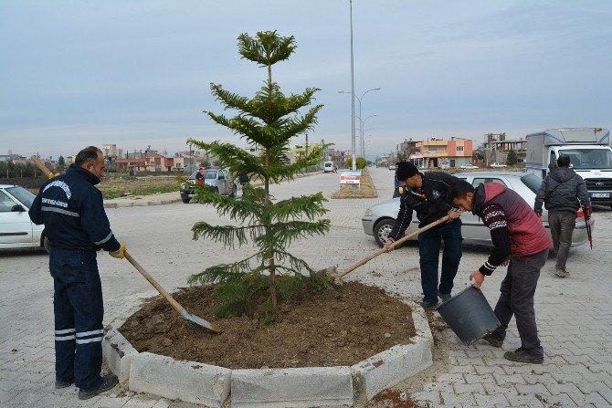 Büyükşehir, Ceyhan'ın Bulvarlarını Ağaçlandırıyor