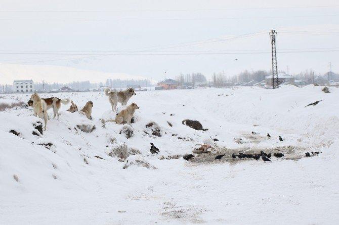 Ağrı'da Sokak Hayvanları Ve Kuşlar İçin Yiyecek Bırakıldı