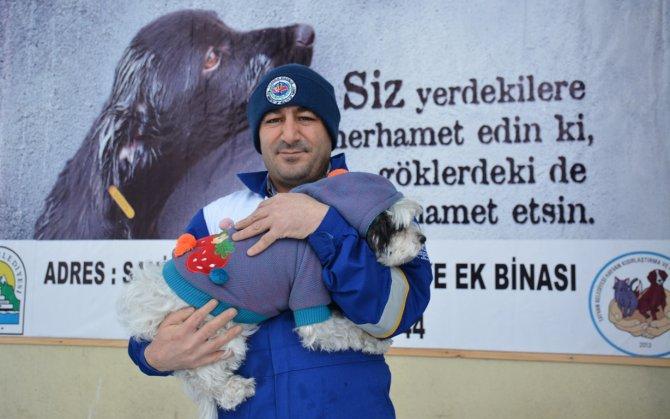 Bitlis'teki köpeklere soğuğa karşı elbiseli koruma