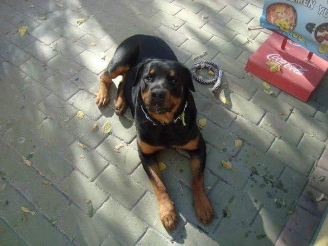 Her Yerde Kaybolan Köpeğini Arıyor