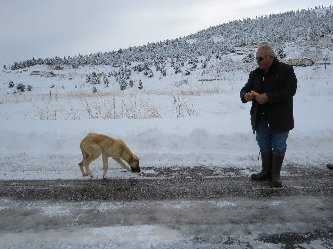 Gölcük Yaylası'nda Mahsur Kalan Köpeklere Yiyecek Götürüldü