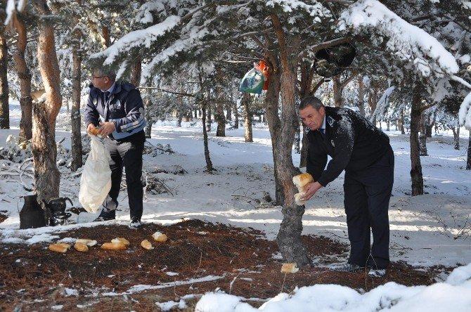 Sorgun'da Kar Yağışının Ardından Doğaya Yem Bırakıldı