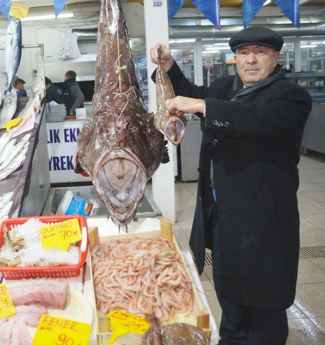 Marmara'da dev Fener balığı yakalandı