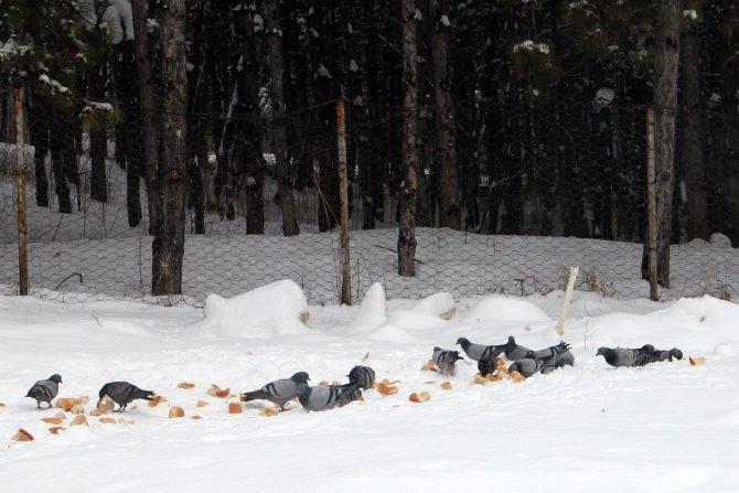 Çankaya'daki sokak hayvanlarına kışın mama desteği