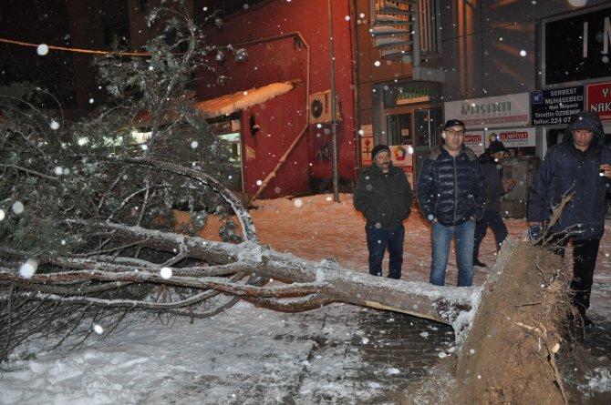 Karın ağırlığına dayanamayan çam ağacı devrildi