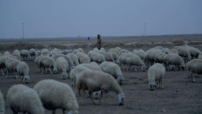 Türkiye'de çobanlık yapan Afgan çocuklar: Kaçmasaydık canlı bomba olacaktık