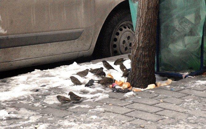 """Veteriner Hekimi Tuğba Çine: """"Yol Üzerine Konan Kuşlar İçin Duyarlı Olun"""""""