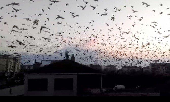 Sığırcık Kuşlarının Gökyüzünde Sergilediği Görsel Şov Büyüledi