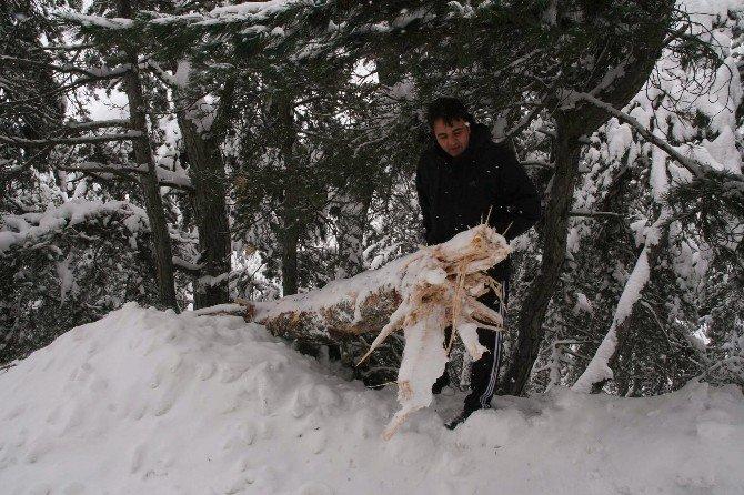 Yozgat'ta Karın Ağırlığını Taşıyamayan Ağaçlar Kırıldı