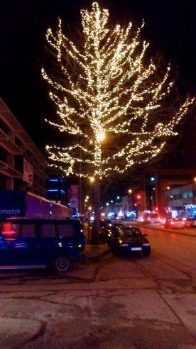 Erzincan'da Ağaçlar Işıl Işıl