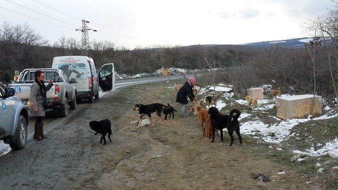 Sokak Hayvanları İçin Bir Araya Geldiler