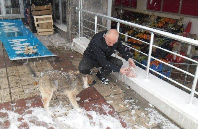 Canik'te Sokak Hayvanları Unutulmadı