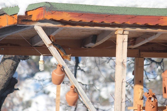 Yaka Manastır Tabiat Parkı'ndaki Sincaplar İlgi Çekiyor