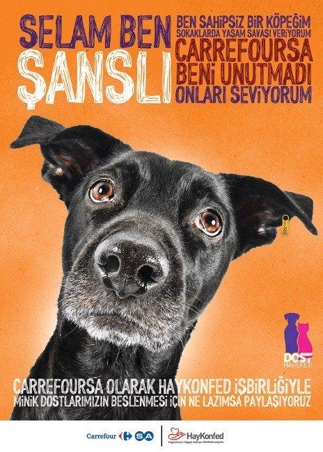 """Carrefoursa'dan Sokak Hayvanları İçin """"Dost Hareketi"""" Projesi"""